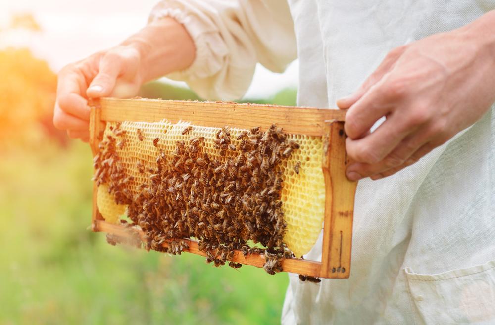 nourrissment d'abeilles